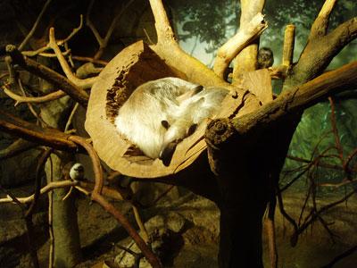 Tree Sleeper